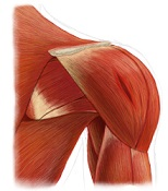 Shoulder Injury Information
